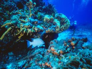 Fondo marino sfondi wallpaper for Fondo per acquario